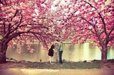 Romantic couple kissing under a tree in Kyoto, Japan