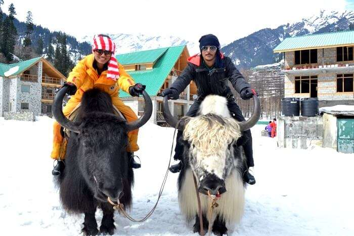 going for a yak ride at solang valley