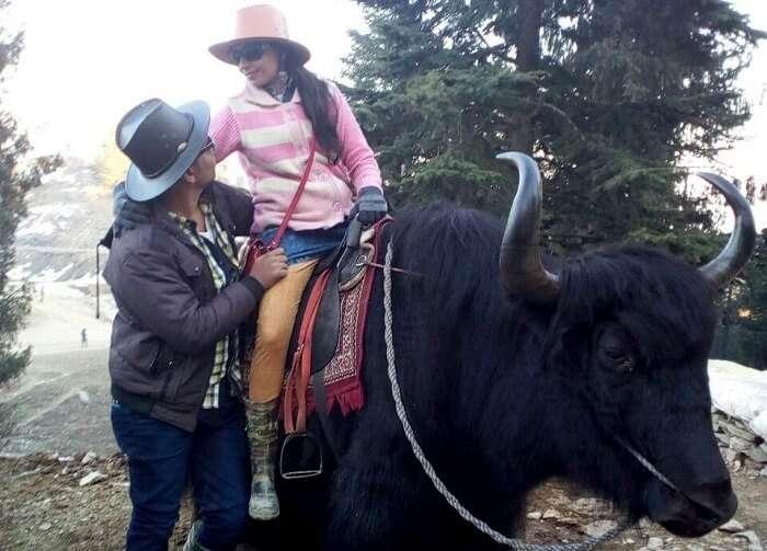 posing on top of a yak in kufri