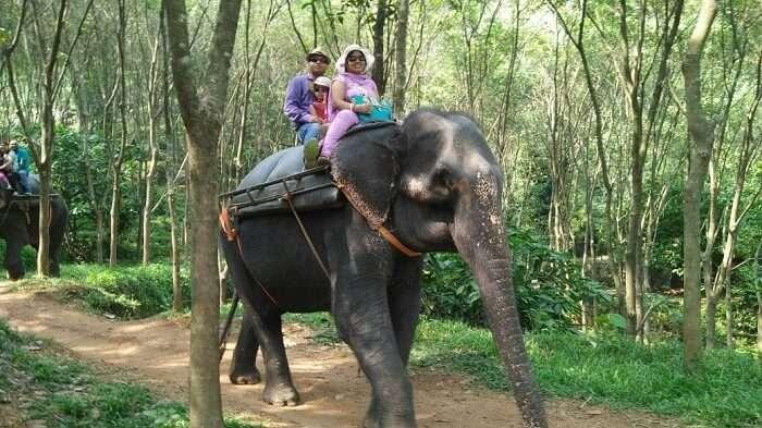 elephant ride in kerala
