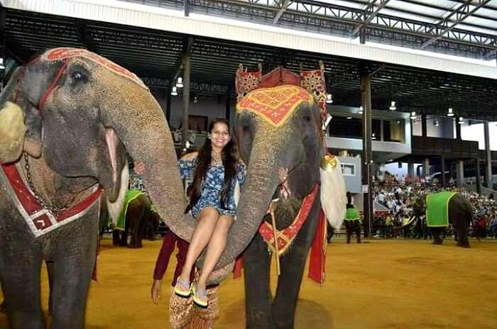Elephant show in pattaya
