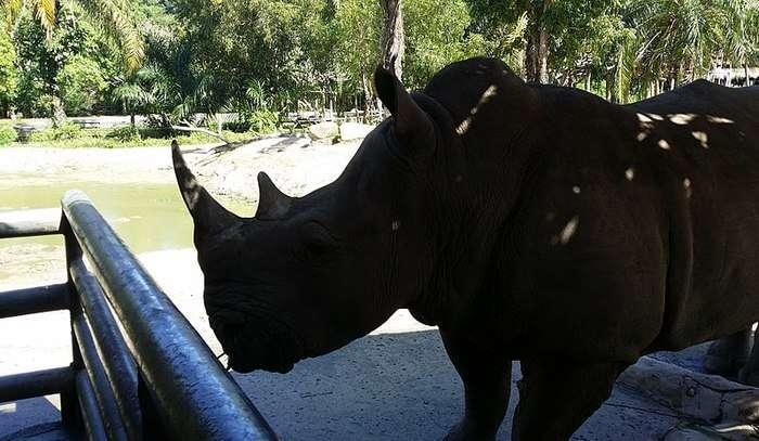 Open Zoo View