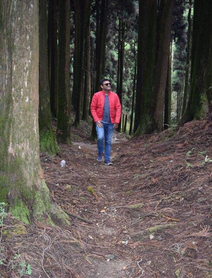 Woods of Darjeeling