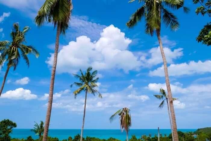 Beach Trees Sea Koh Samui Clouds Blue Sky