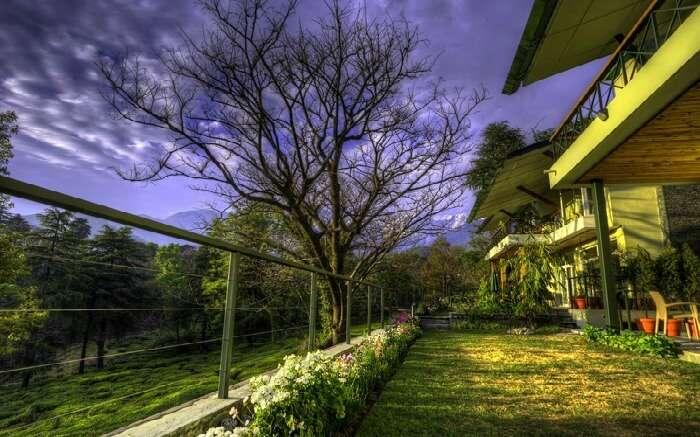 Striking morning hues as seen in Norwood Green homestay in Bundla tea estate Palampur