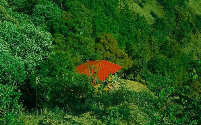 green jungle of Shoghi in Himachal