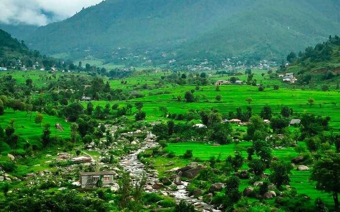 green paddy fields of Karsog in Himachal
