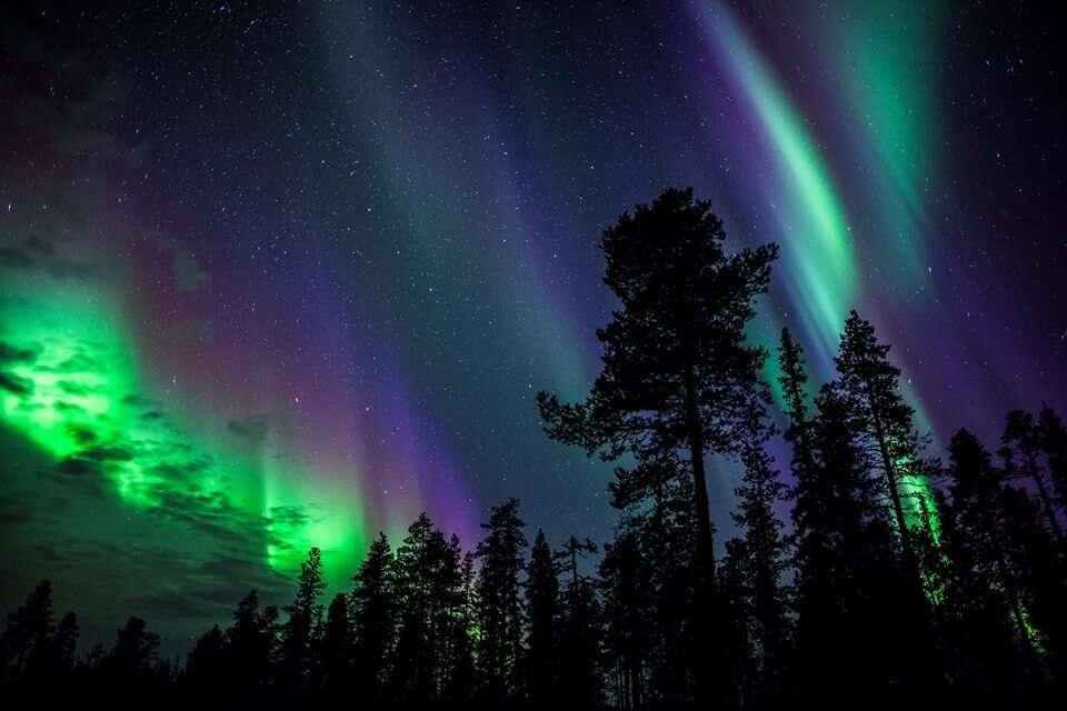 Tree shadows under Northern Lights