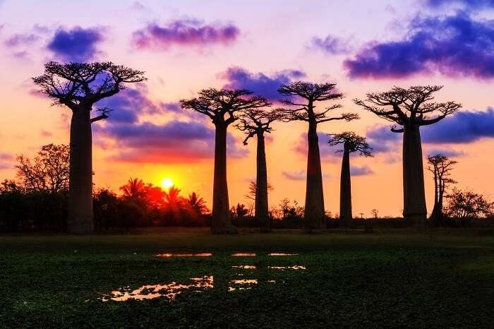 places to visit on honeymoon in Africa