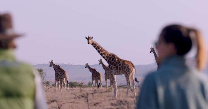 Couple on safari in Kenya