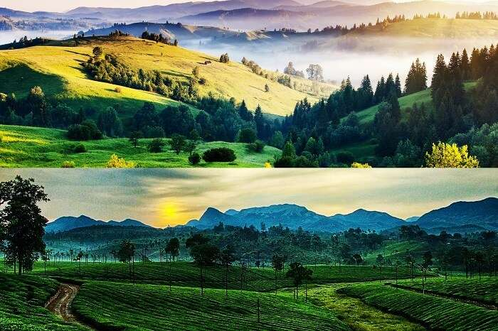 Kodaikanal vs Ooty For Honeymoon