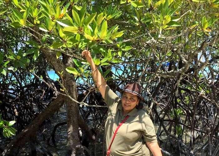 mangrove trees in baratang