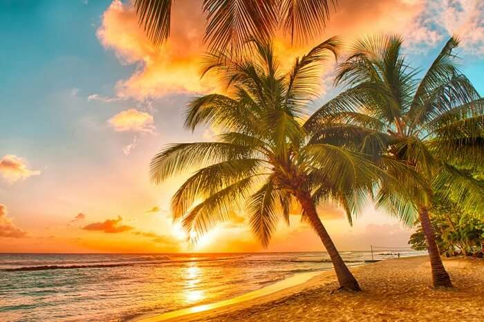 Beautiful sunset over the sea with a view at palms on a beach on the Caribbean island of Barbados