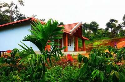 a beautiful homestay surrounded by palm plants