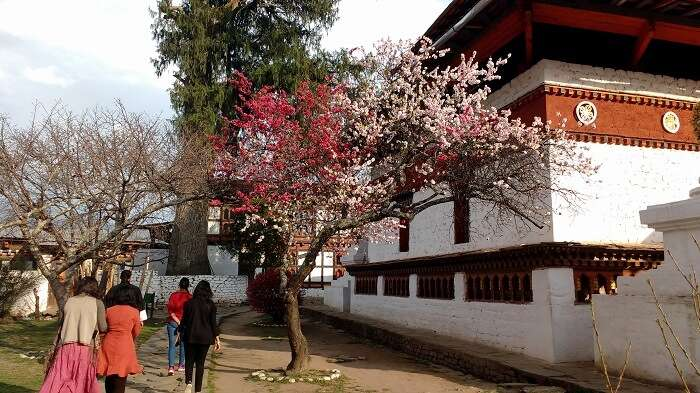 seeking peace at bhutan monastery
