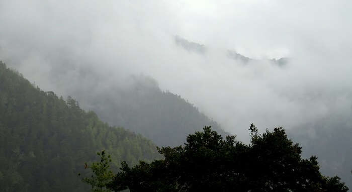mist in bhutan