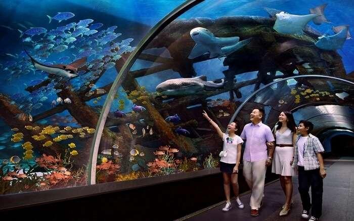 A family in SEA Aquarium in Singapore