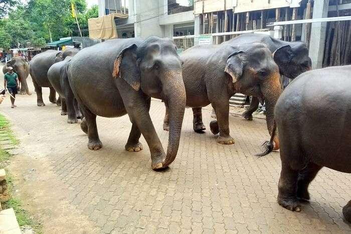 animals in Sri Lanka