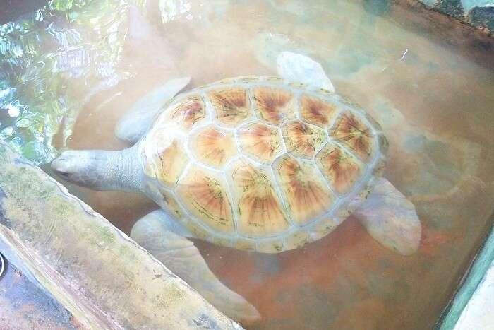 rare turtles in Sri Lanka