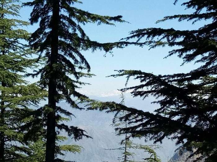 weekend trip to Shimla with family