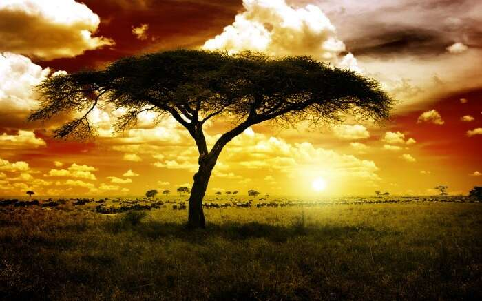 A beautiful sunset view in Kruger National Park in South Africa