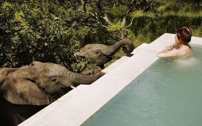 A woman taking a bath in a pool in Royal Malewane game lodge in Thornybush Game Reserve