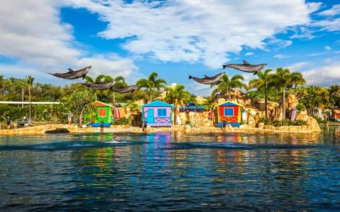 Dolphins in Seaworld theme park