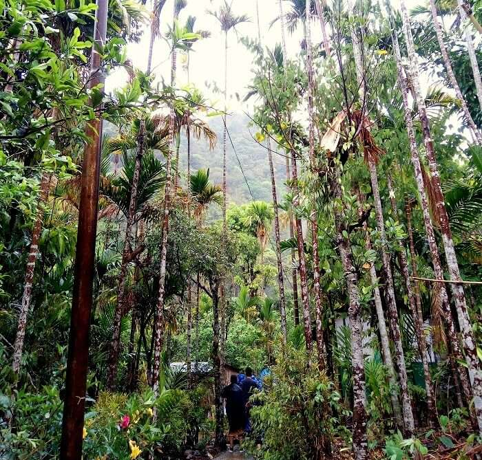 forests in meghalaya