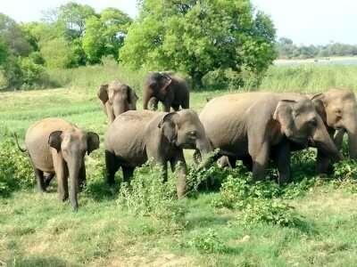 elephant watching in sigiriya