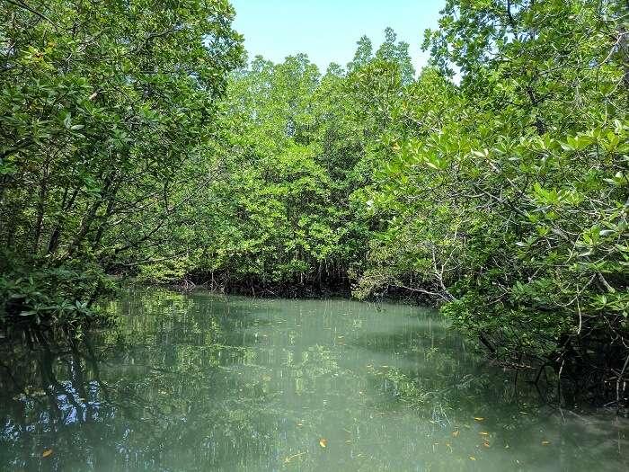 nature in langkawi