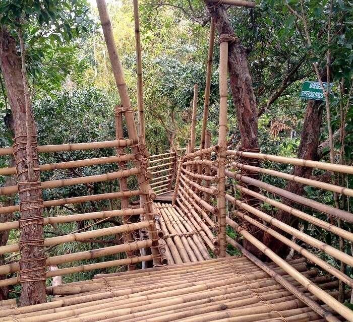 bamboo bridge in meghalaya