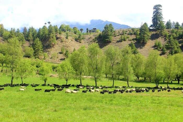ura valley bhutan
