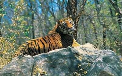 acj-2908-parambikulam-tiger-reserve-feature