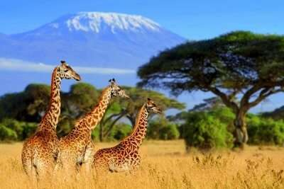 best safari in south africa