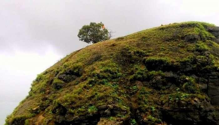 Shivaji's Ladder