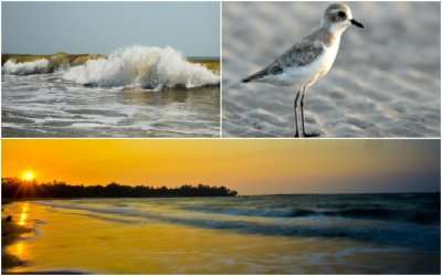 collage of beaches and birds