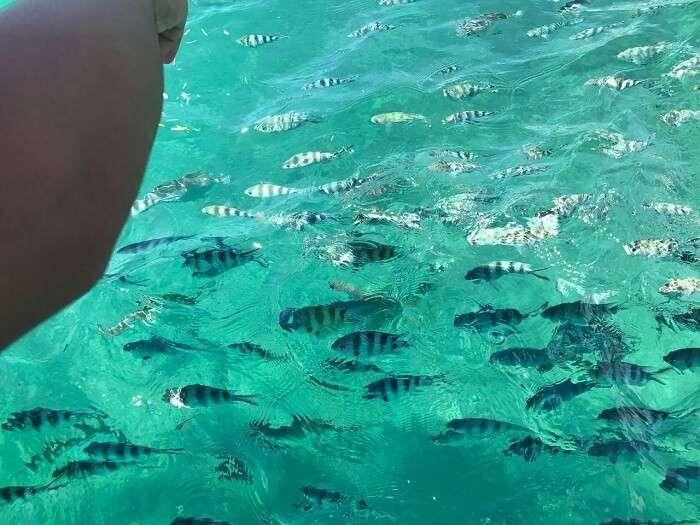 Resort's activities in Seychelles