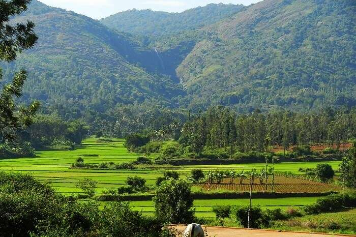 Kolli Hills A Detailed 2019 Guide To An Offbeat Paradise