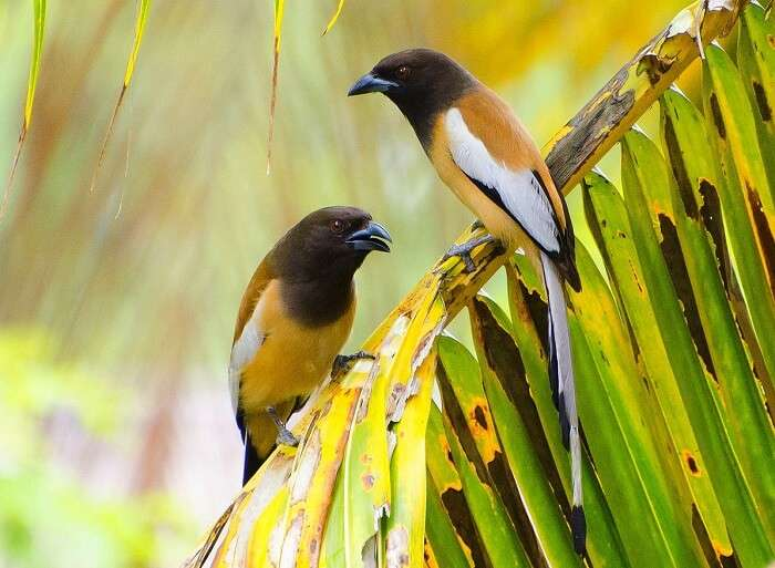 Birds in Sariska