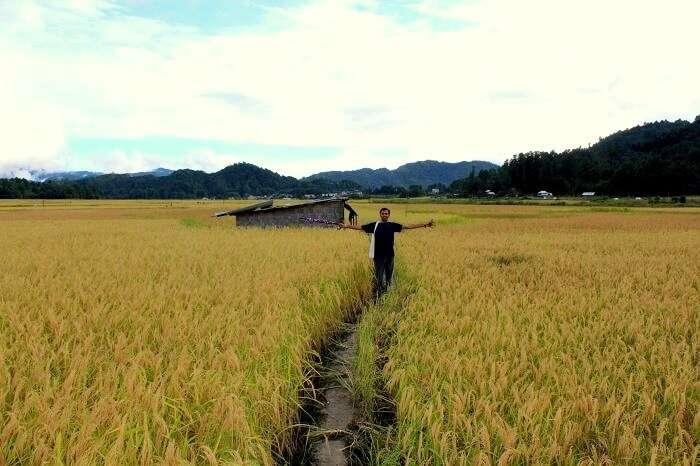 rice fields in arunachal