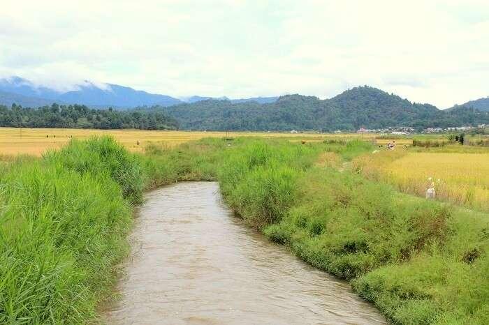 streams in Ziro
