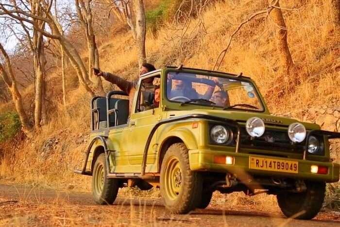 Safari & Wildlife Spotting in Sariska