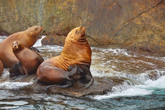 spot seals in Seward