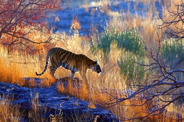 Traveler Reviews for Sariska National Park