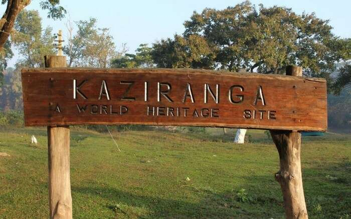 acj-1910-kaziranga-national-park-3