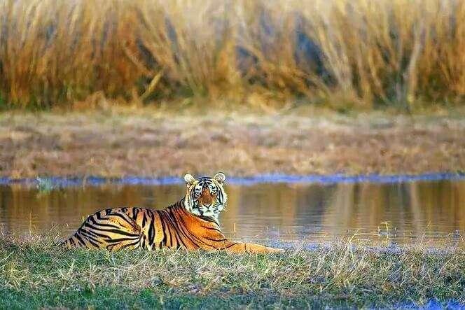 best time to visit sariska in Rajasthan