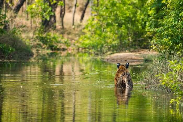 nature of bandhavgarh national park