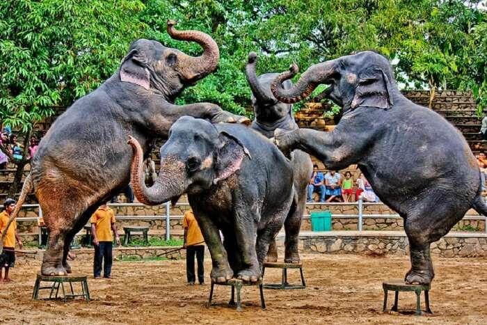 Dehiwala Zoological Garden Colombo