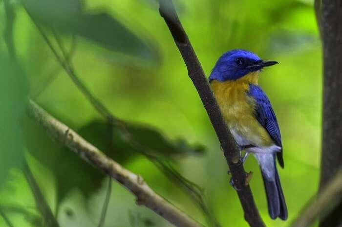 Avifauna Of Silent Valley National Park
