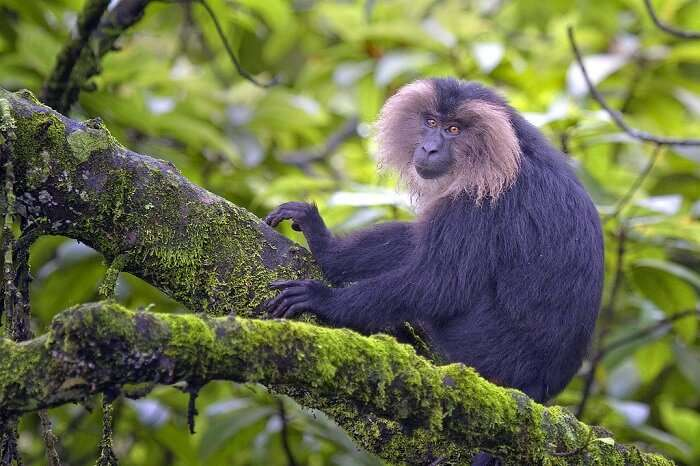 Fauna Of Silent Valley National Park
